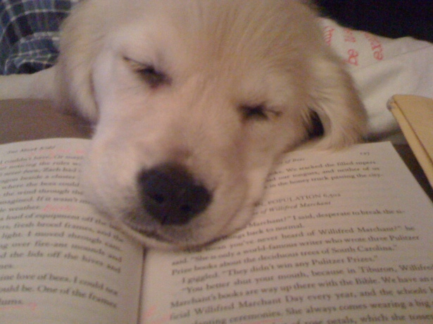 puppy reading book